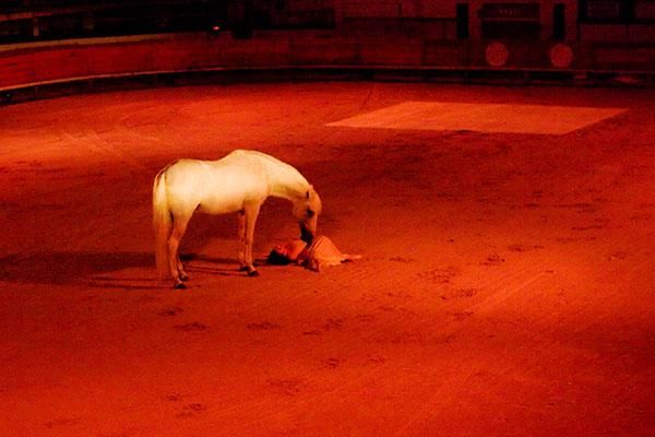 chevaux et toiles- Le spectacle_9