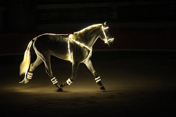 chevaux et toiles